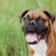 Animaux de compagnie : L'homéopathie pour la santé et le bien-être de votre chien