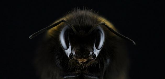 Abeilles : récolte de miel quasi-nulle pour 2016