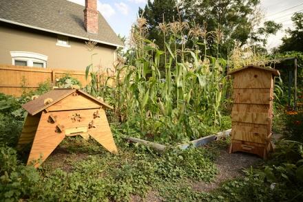 Les ruches open source ou la protection des abeilles 2.0