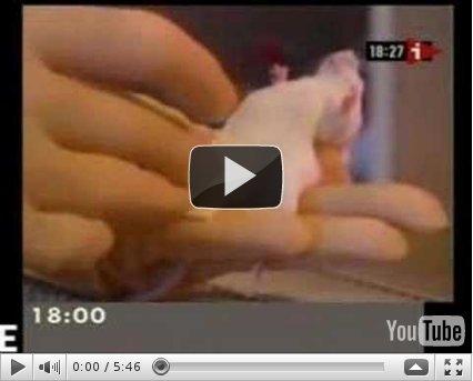 Zapping ecologique en vidéo