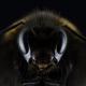Disparition des insectes – The Last Spring