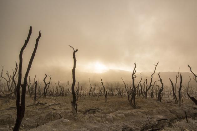 Marche Mondiale pour le Climat – 8 Décembre